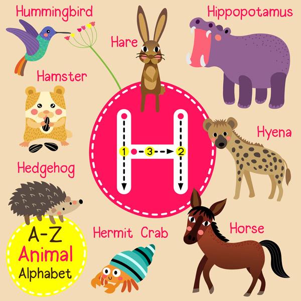 素材分类: 矢量卡通动物所需点数: 0 点 关键词: 字母h动物园字母表