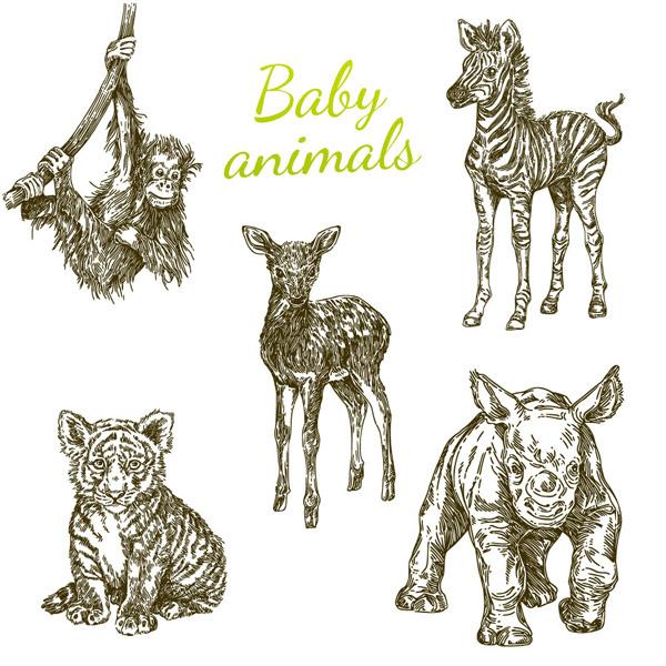 手绘幼年野生动物