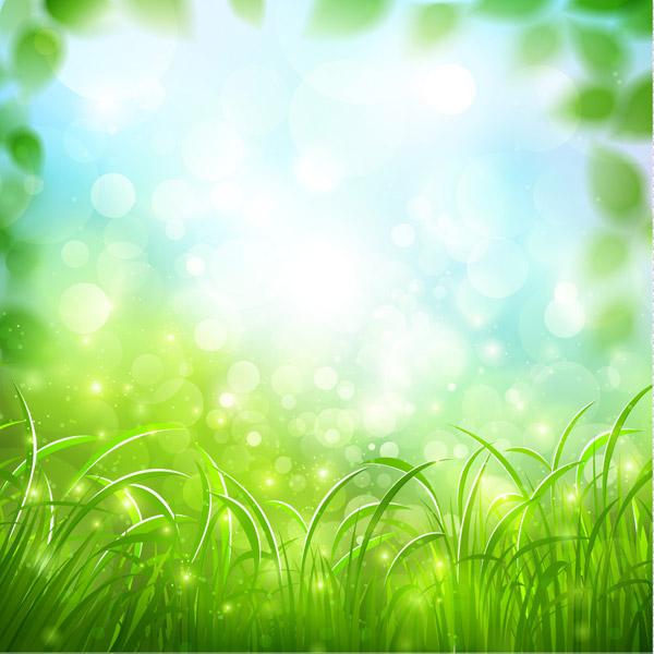 草地和阳光风景