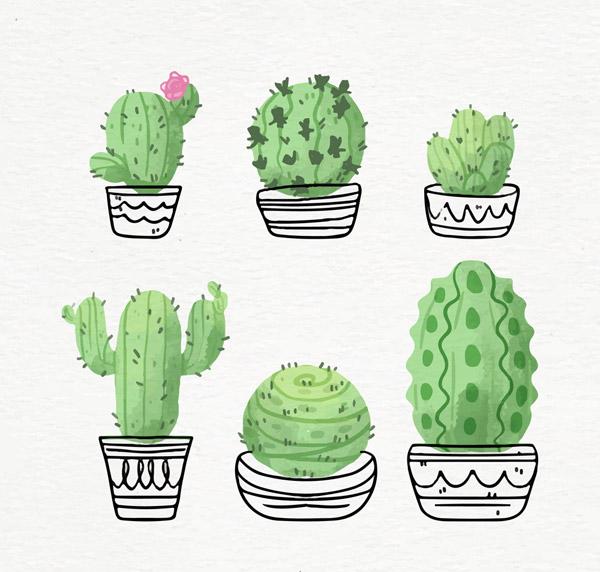 水彩,仙人掌,盆栽,仙人球,观赏植物,植物,矢量图,ai格式 下载文件特别