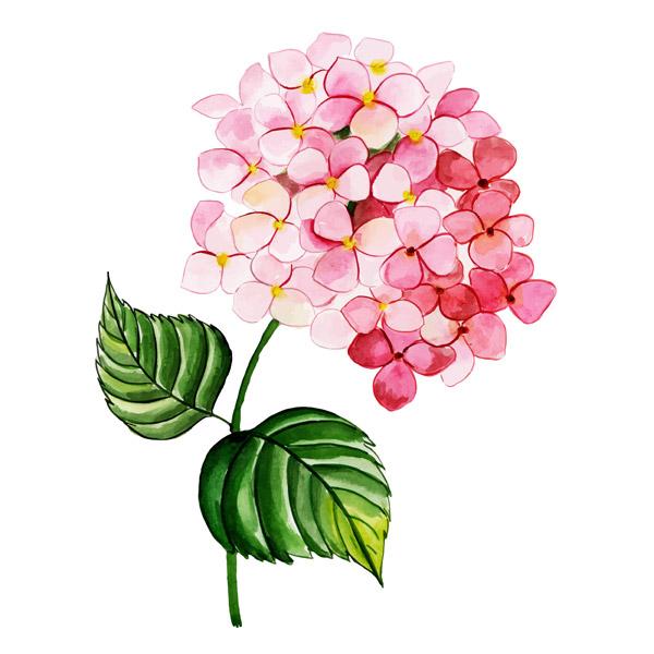 水彩花朵矢量