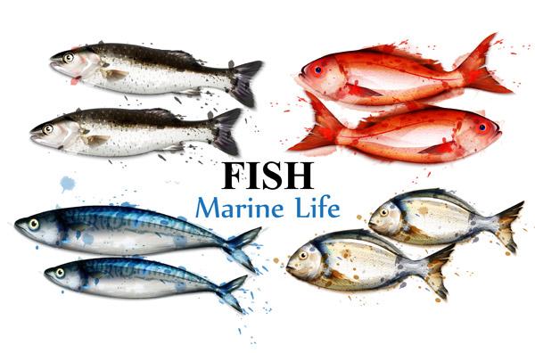 素材分类: 水中生物所需点数: 0 点 关键词: 水彩鱼矢量,五颜六色