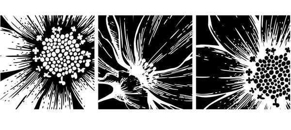 黑白花朵图案挂画