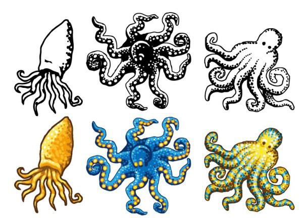 世界上最可爱的章鱼