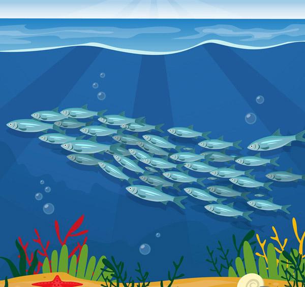 美丽海底银色鱼群