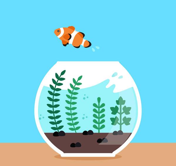 跳出鱼缸的小丑鱼