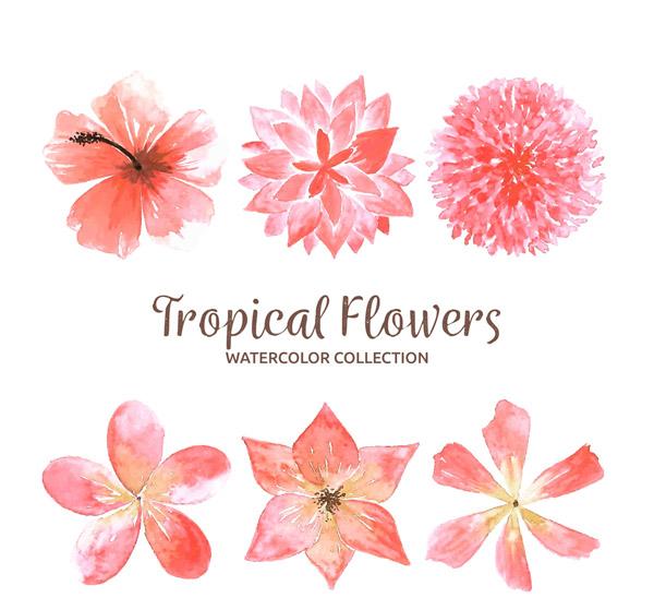 彩绘粉色热带花卉