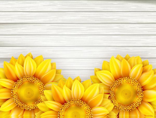 美丽向日葵花