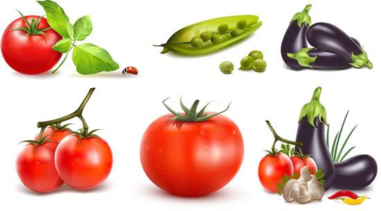 高清蔬菜矢量