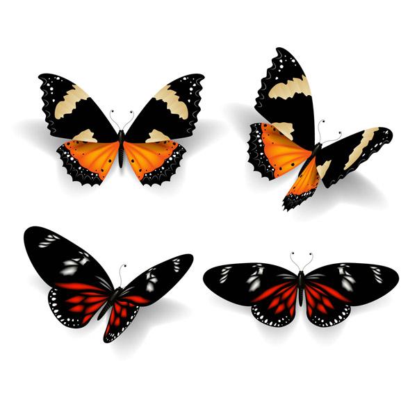 美丽花纹蝴蝶