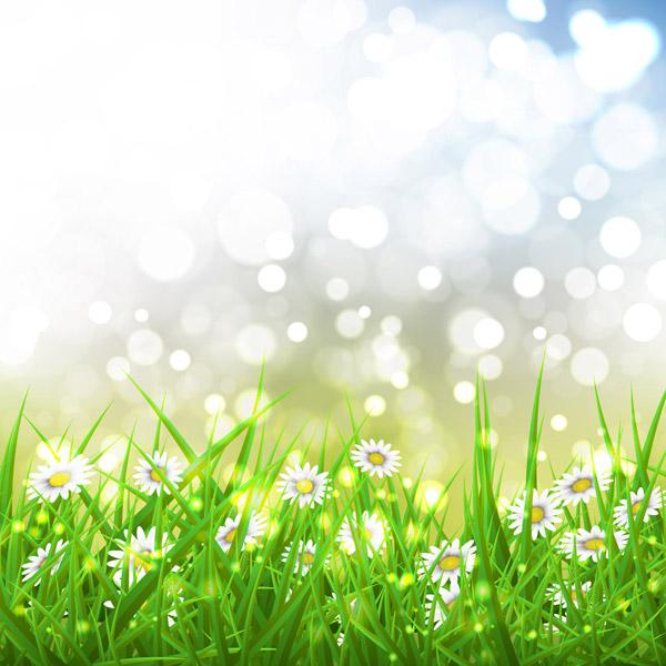 雏菊花丛和光晕