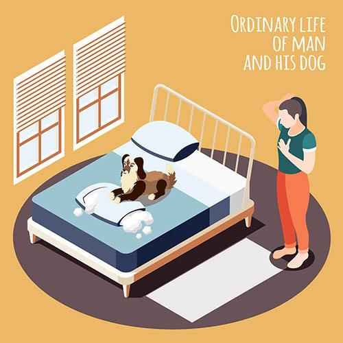 床上的宠物狗