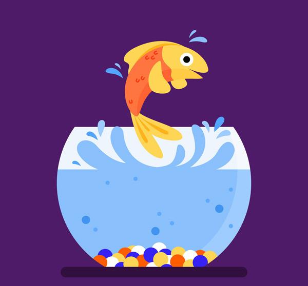 彩色跳跃的金鱼图片