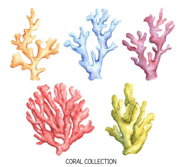 彩绘珊瑚设计