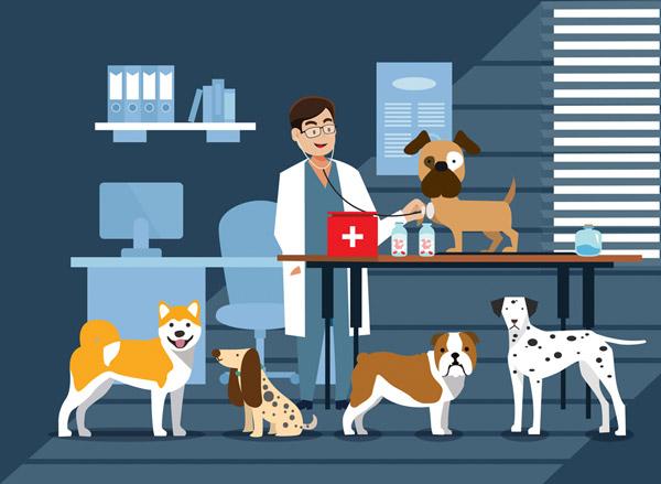 宠物店内医生和狗