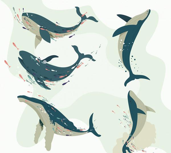 海洋鲸鱼设计矢量