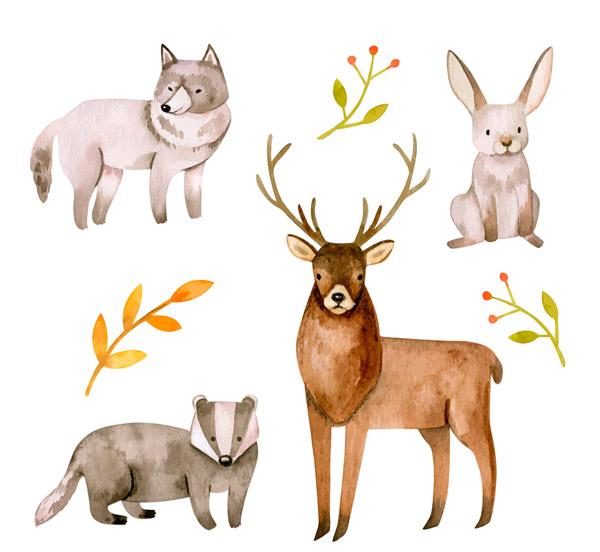野生动物和树枝