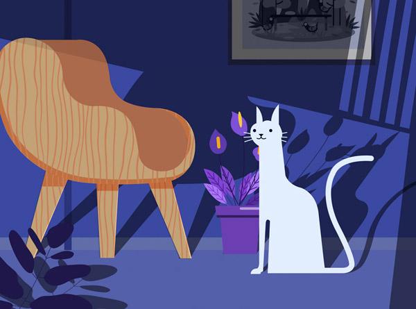 客厅里的白色猫咪