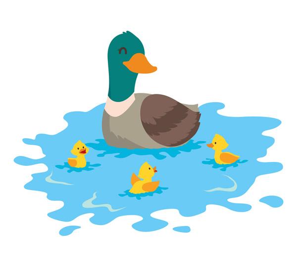 河中的野鸭子