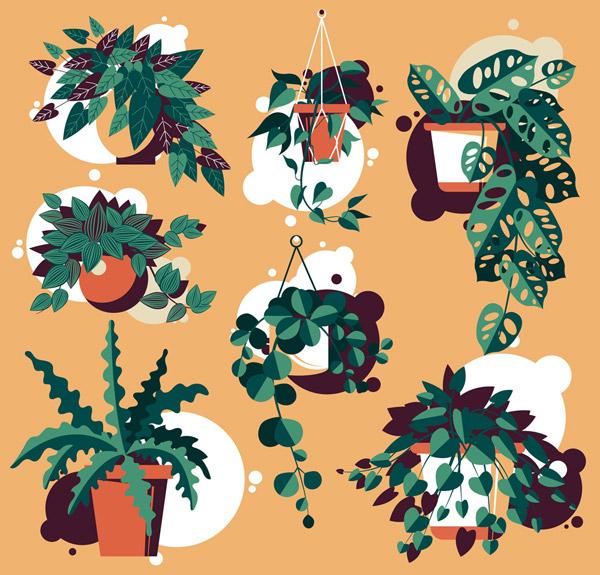 绿色植物盆栽