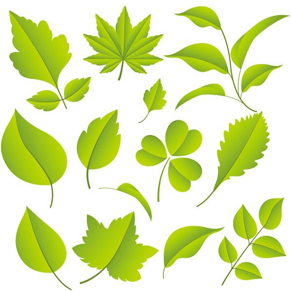 各种绿色树叶