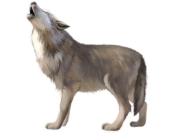 狼矢量素材
