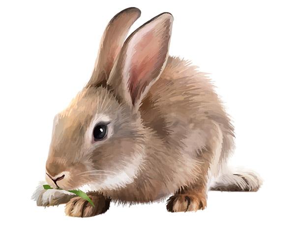 兔子矢量素材