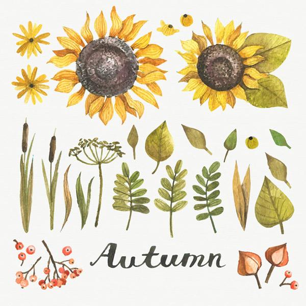 矢量秋天花卉