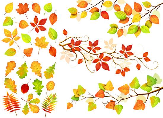秋天叶子树枝图片