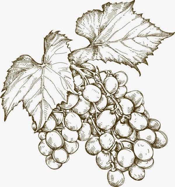 矢量手绘葡萄