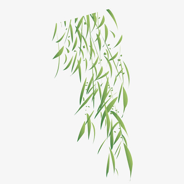 绿色柳树叶
