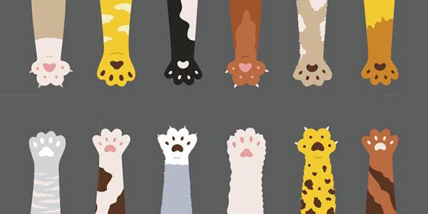 蓬松多彩猫爪