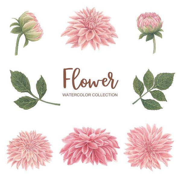 水彩粉红色花朵