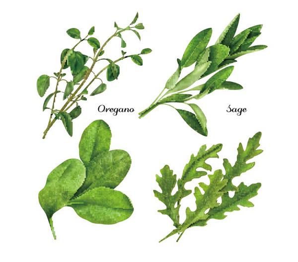 新鲜草本植物