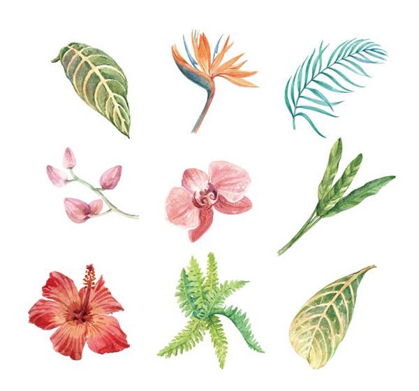水彩热带植物元素