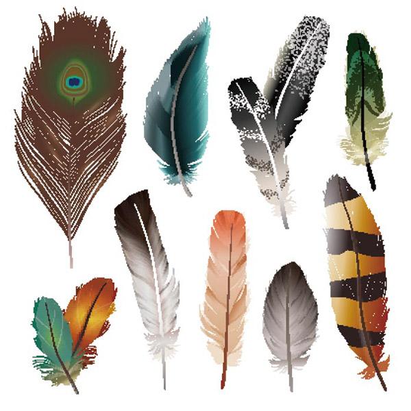 鸟类羽毛矢量