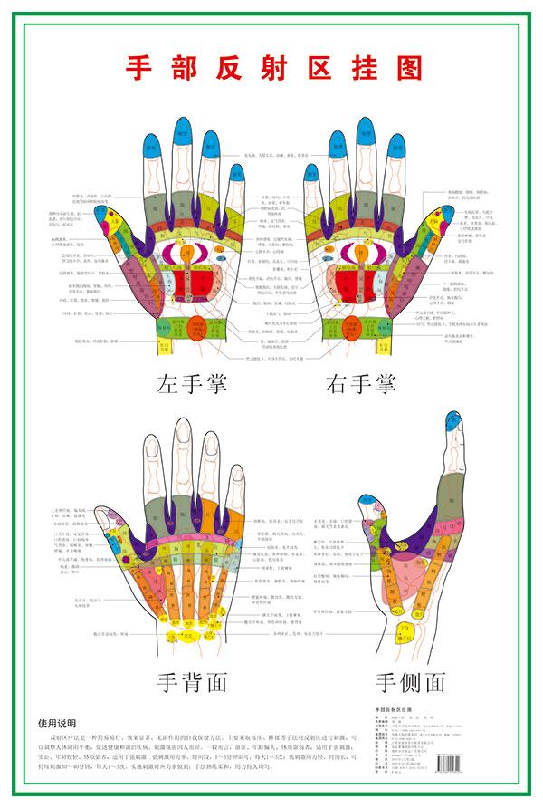 手部反射区挂图