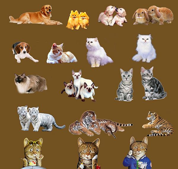 宠物小动物猫狗老虎图片大全psd素材下载,宠物,小动物,狗,金毛,卡通小猫,老虎,小白虎,兔子,猫科动物,分层素材,图片素材,宠物图片素材,psd分层素材,海报设计,海报素材,广告设计模板,psd素材免费下载,源文件下载