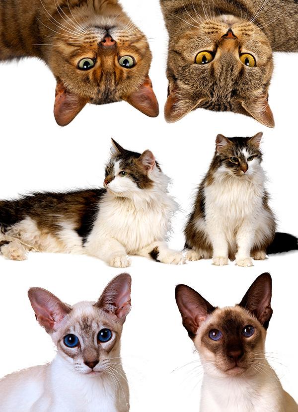 宠物猫图片图片