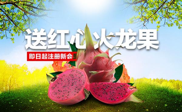 火龙果促销海报_素材中国sccnn.com图片