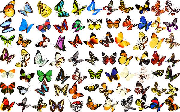 各种蝴蝶图片