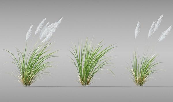 草模型,树木模型,花模型,植物,植物模型,园林,景观植物,阔叶树木,绿化