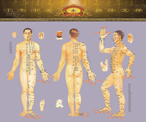 人体经络穴位图解,中医经络穴位图,穴位图解彩图,psd素材免费下载,源