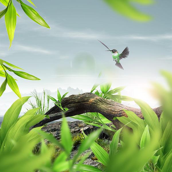 绿叶,小清新图片,清新图片,蜂鸟图片,动物,唯美图片,设计素材,图片