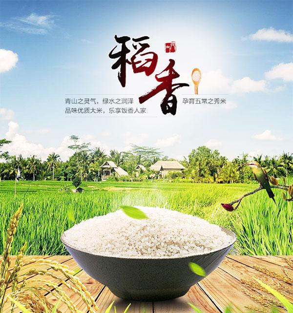 大米海报,大米广告,大米促销,大米宣传,稻香,田园背景,绿叶,蓝天白云