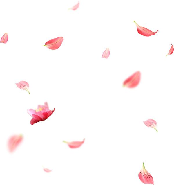唯美花瓣元素