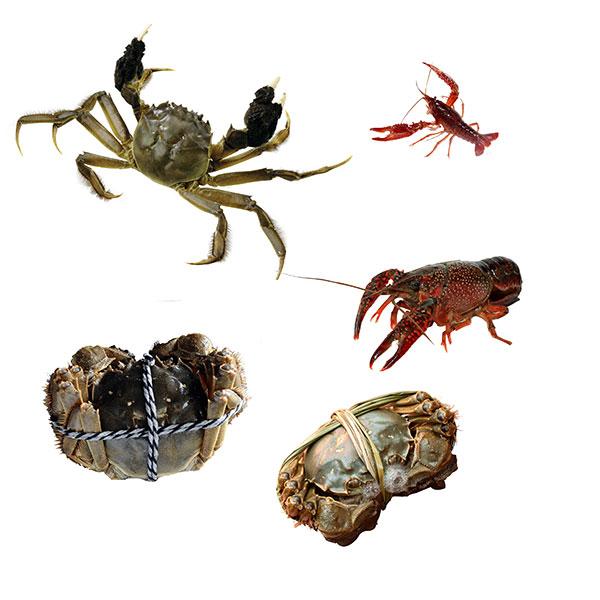 大闸蟹小龙虾