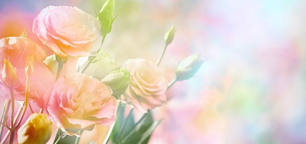玫瑰花朵背景图片