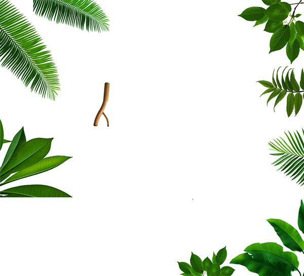 树叶元素psd分层素材,叶子,春,树叶,树枝,动感树叶,春天素材,春季元素图片