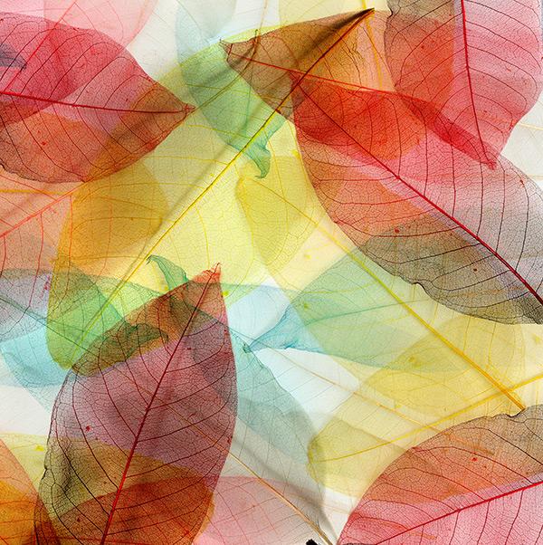 彩色树叶背景